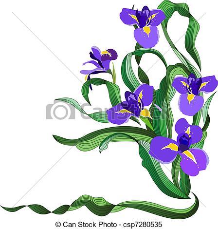 Bunch of blue irises isolated on white background