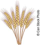 ... bunch of vector wheat ears