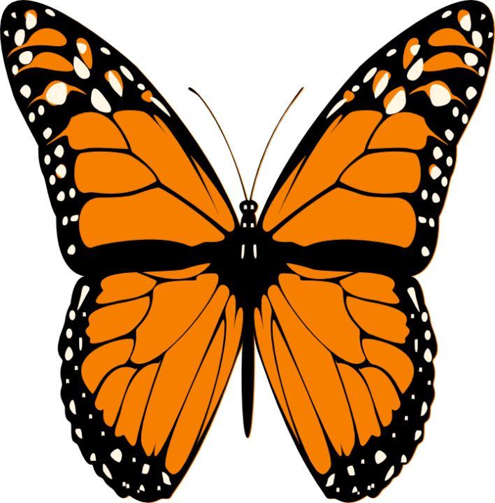 Butterflies butterfly clip art butterfly clipart