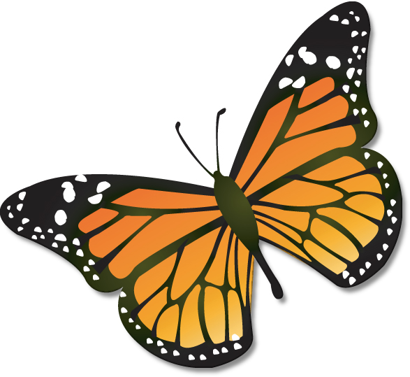 butterfly clipart #6