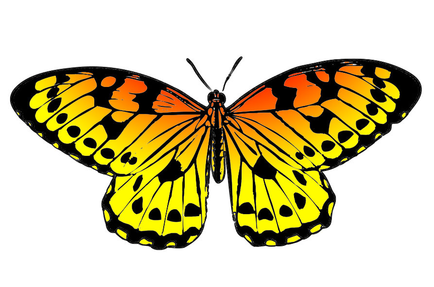 black and orange drawing of butterfly hdclipartall.com