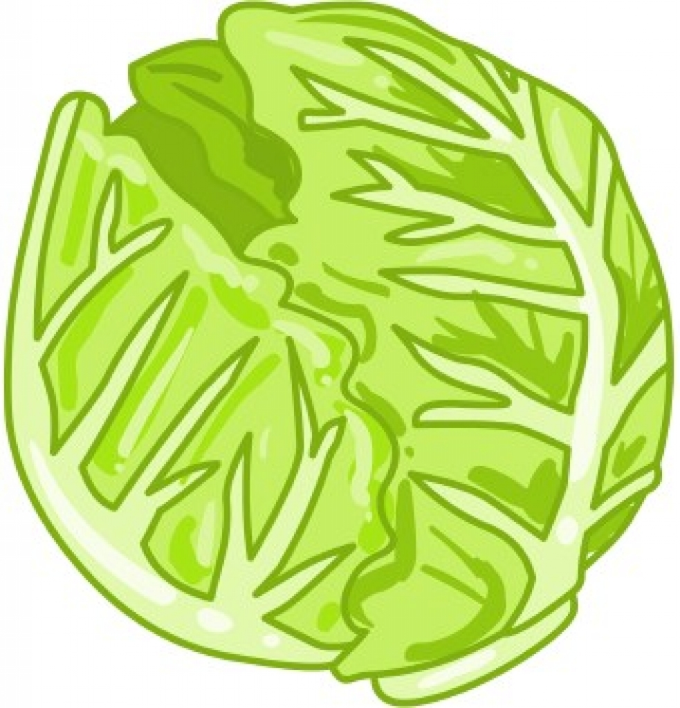 cabbage clipart cabbage clipa - Cabbage Clipart