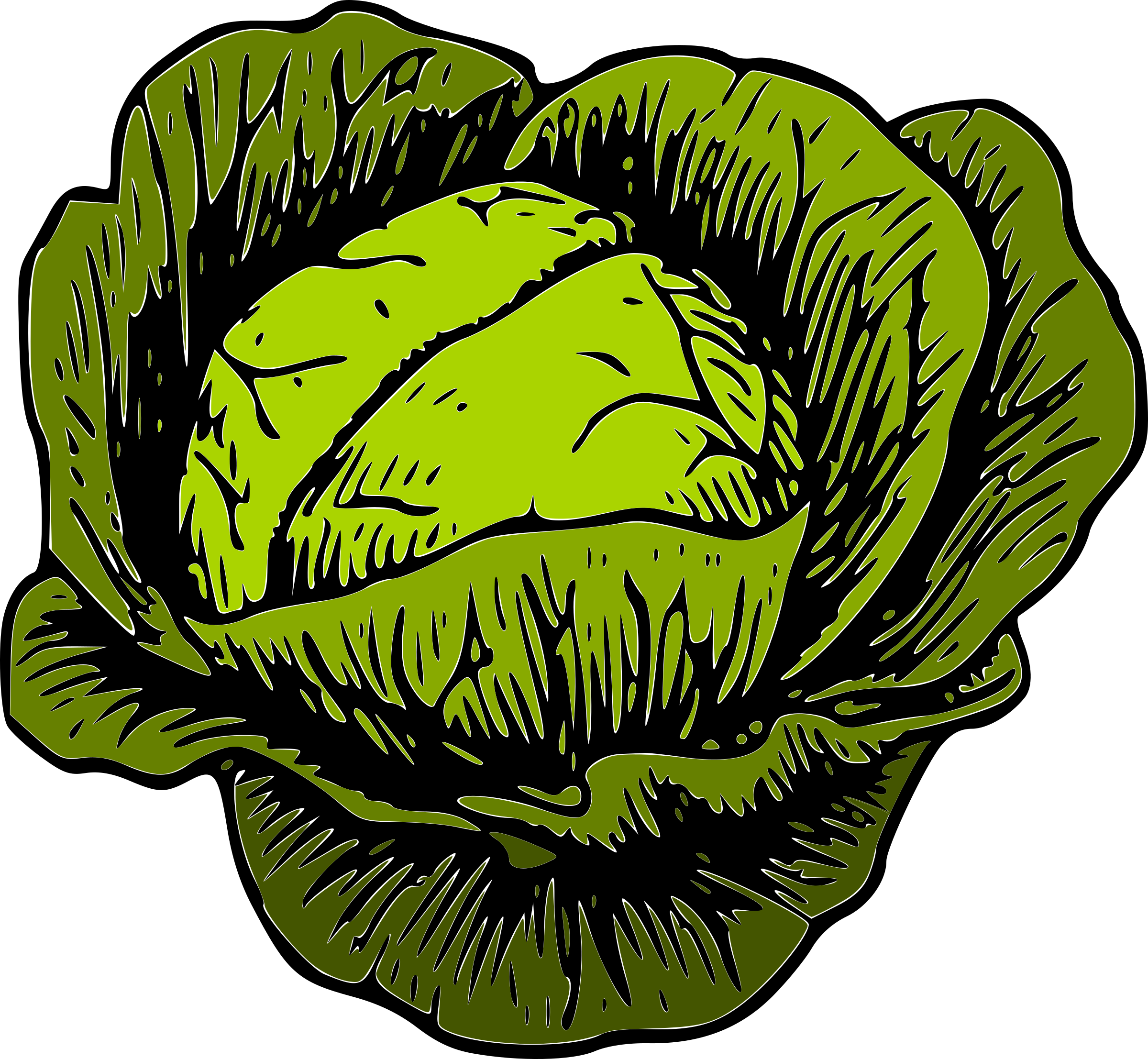 Cabbage clipart vegetable #5 - Cabbage Clipart
