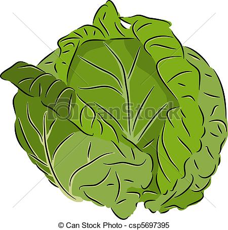 Cabbage - csp5697395 - Cabbage Clipart