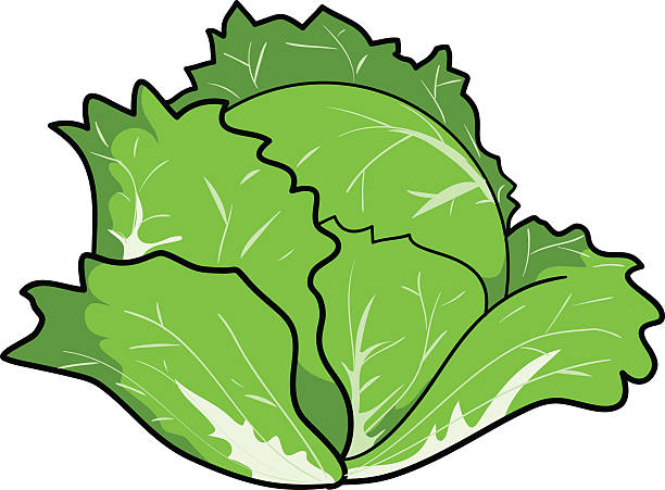 Cabbage vector art illustrati - Cabbage Clipart
