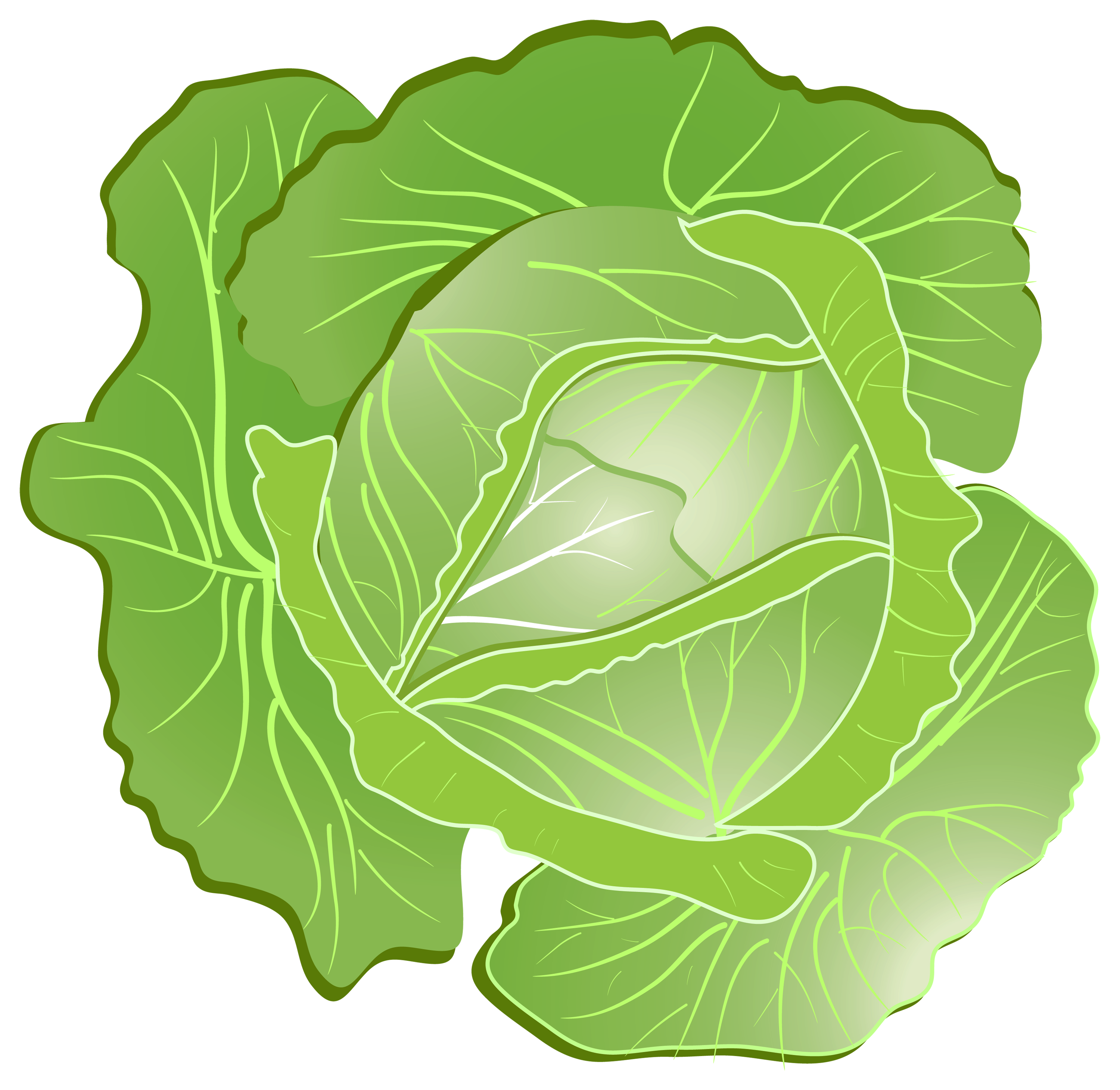 Cartoon Cabbage PNG Clipart - Cabbage Clipart