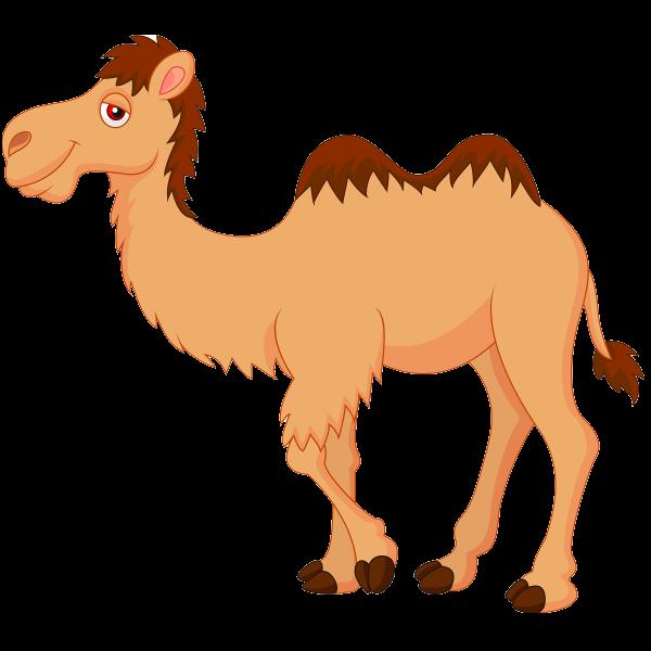 Camel Clipart-Clipartlook.com-600