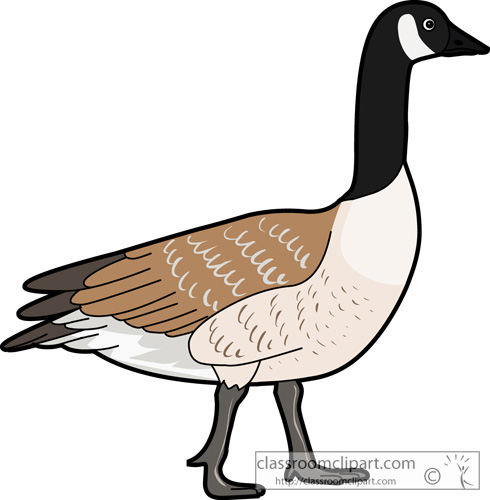 Canadian Goose Clipart #1