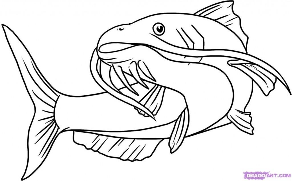 Cartoon Catfish Drawings Catfish Coloring Page