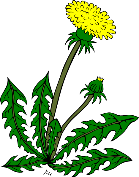 Cartoon Dandelion Flower Clipart Best