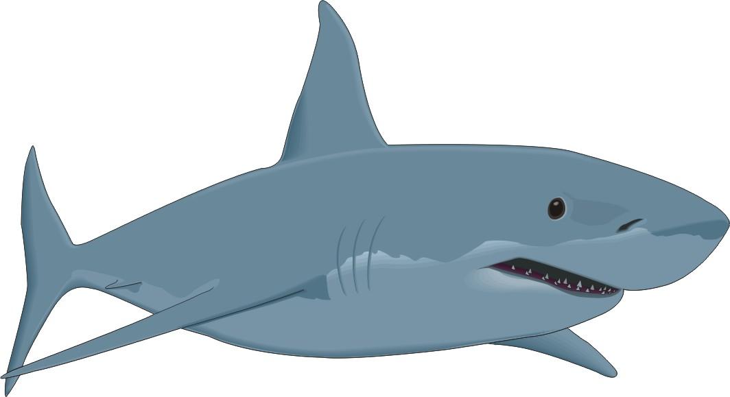 Cartoon Fish Great White Shark