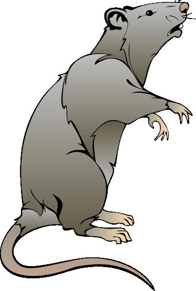 Cartoon Rat Drawings | rat clip art | handz | Pinterest | Cartoon, Drawings and Mice