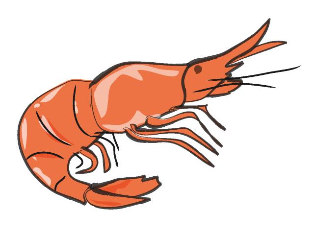 Cartoon shrimp clipart kid