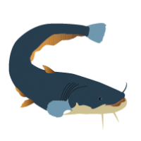 CATFISH CLIPART Archives
