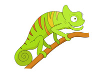 reptile big eyed green chameleon clipart. Size: 60 Kb