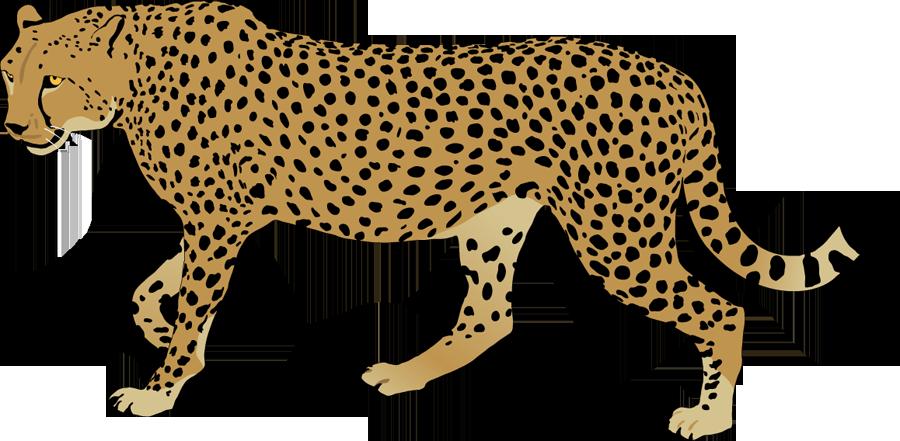 Cheetah Clipart-Clipartlook.com-900