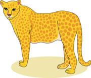 Cheetah Crouching Size: 36 Kb