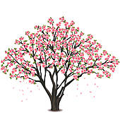 Cherry tree blossom u0026middot; Japanese cherry tree blossom over white