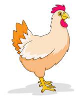 Chicken Cartoon Clipart Size: 66 Kb