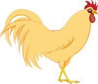 chicken clipart. Size: 92 Kb
