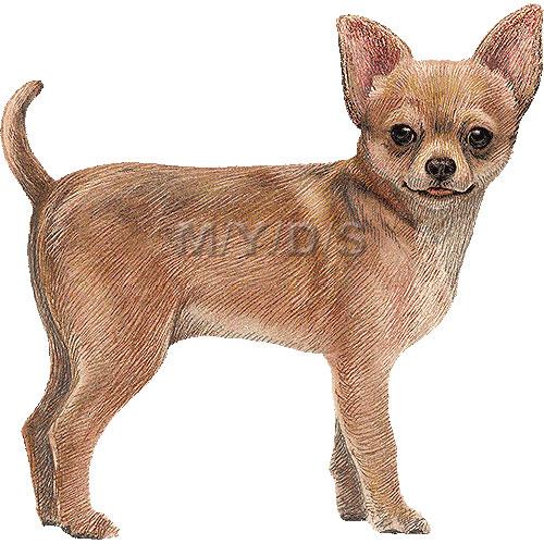 Chihuahua Clipart Graphics Free Clip Art