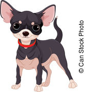 ... Chihuahua - Cute dog of breed Chihuahua