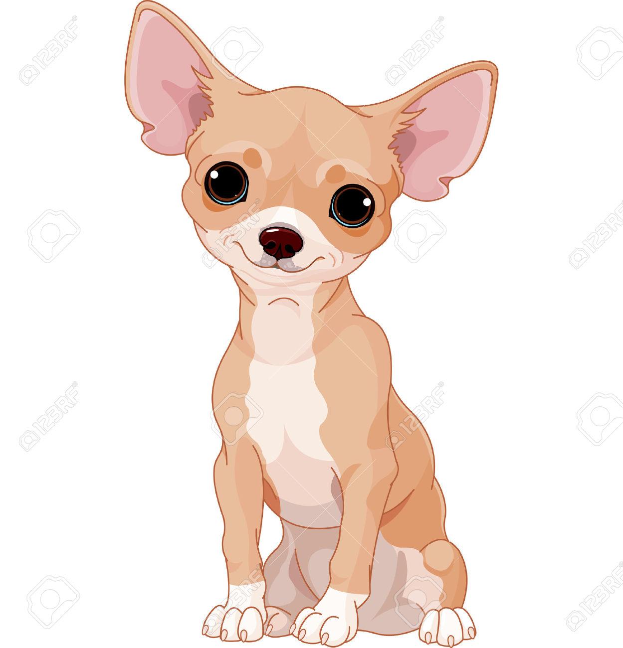 chihuahua: Cute dog of breed .