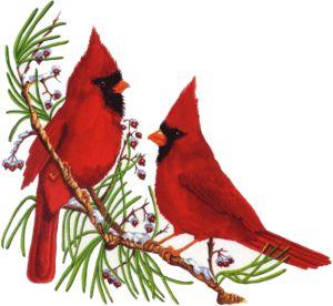 Christmas Cardinal Clip Art | Index of /mshshomework/tmcdowell/Clipart/cardinals