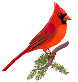 Christmas Cardinal Clipart .