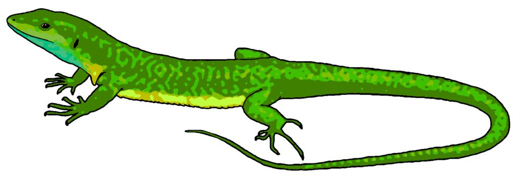 Clip Art. Lizard Clipart. Stonetire Free Clip Art Images