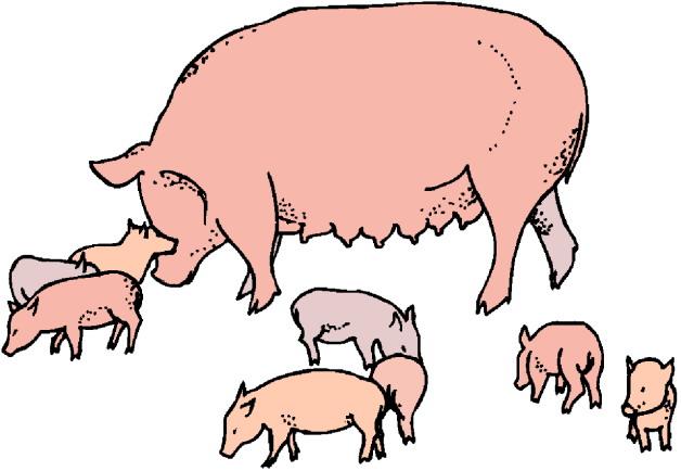 Clip Art Pigs Clip Art