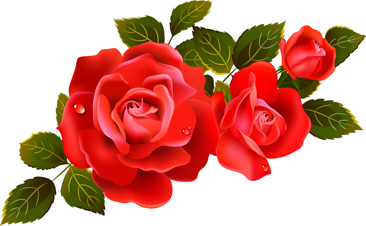 Clip art, Red roses and .