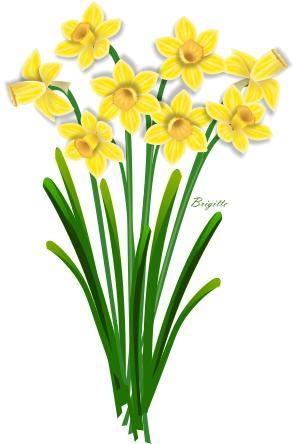 Clipart Daffodil By Brigitte