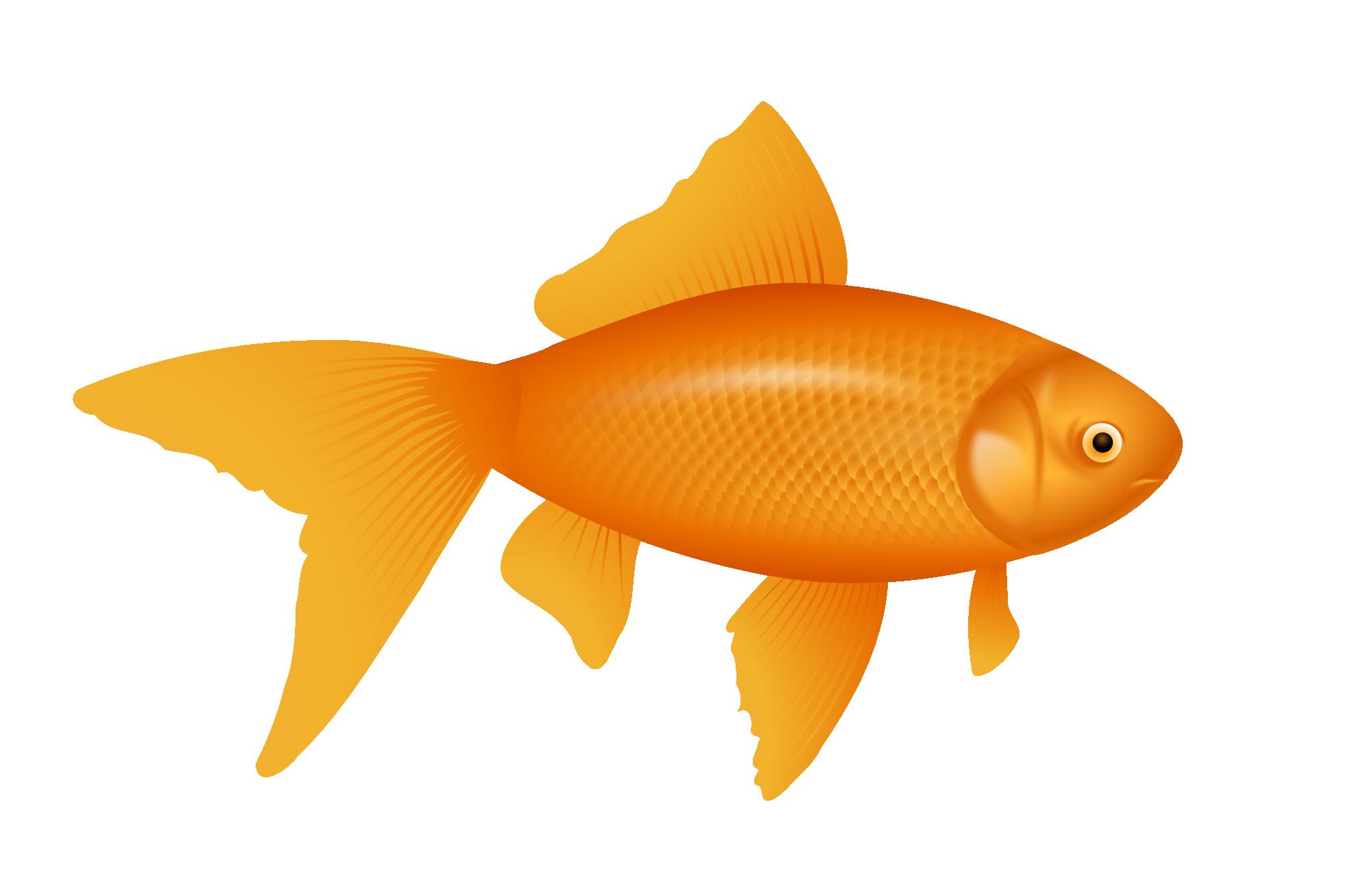 Clipartist Net Clip Art Gold Fish Goldfish Svg