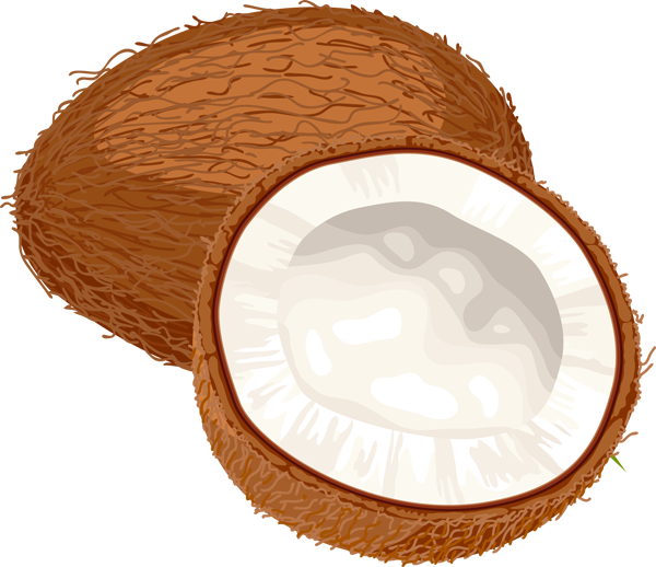Coconut Clipart-hdclipartall.com-Clip Art600