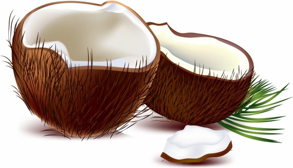 Coconut free vector Coconut Clipart (280 Free vector) for commercial use. format:  ai, eps, cdr, svg vector illustration graphic art design