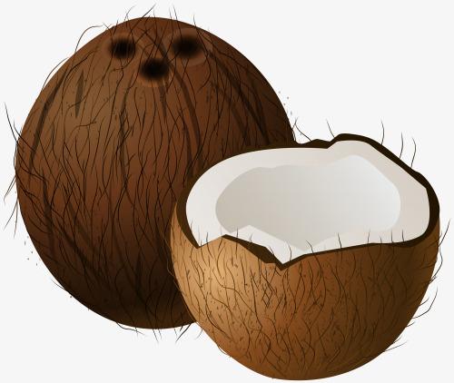 Cut coconut, Cut, Half, Coconut PNG Image and Clipart