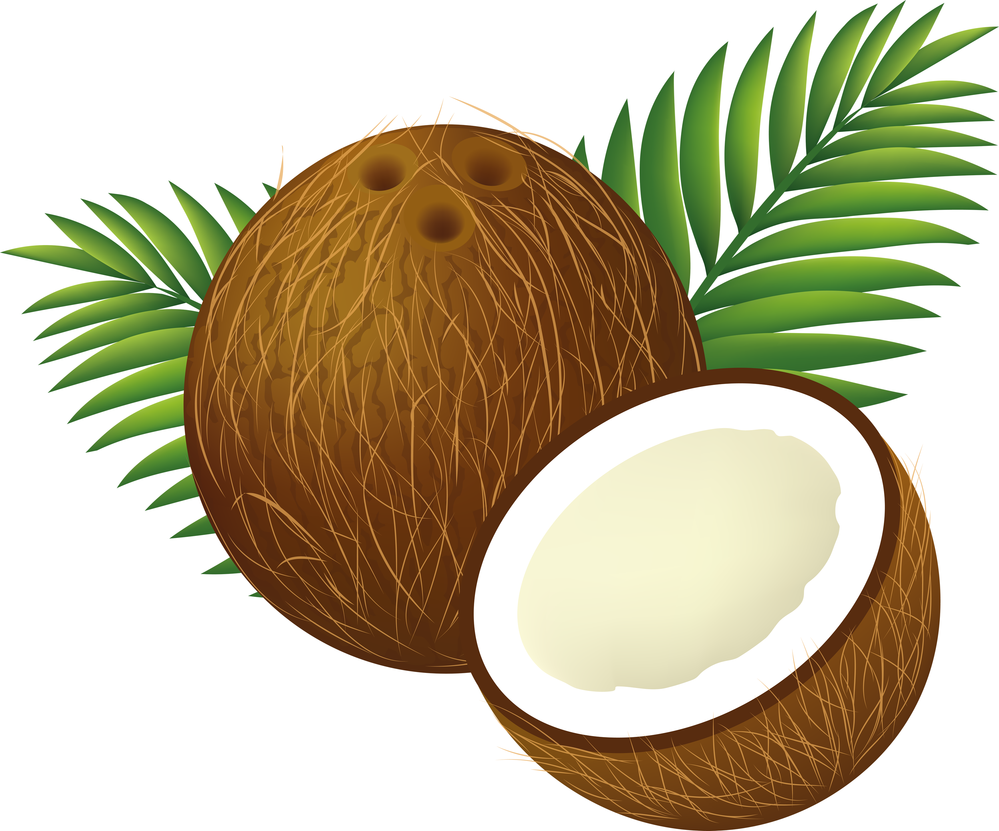 File:Coconut Clipart Cartoon.png