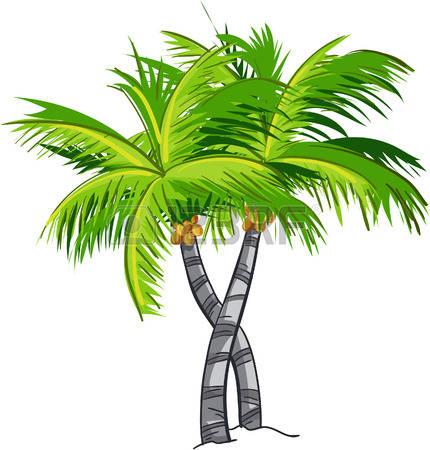 coconut tree: Cartoon coconut tree