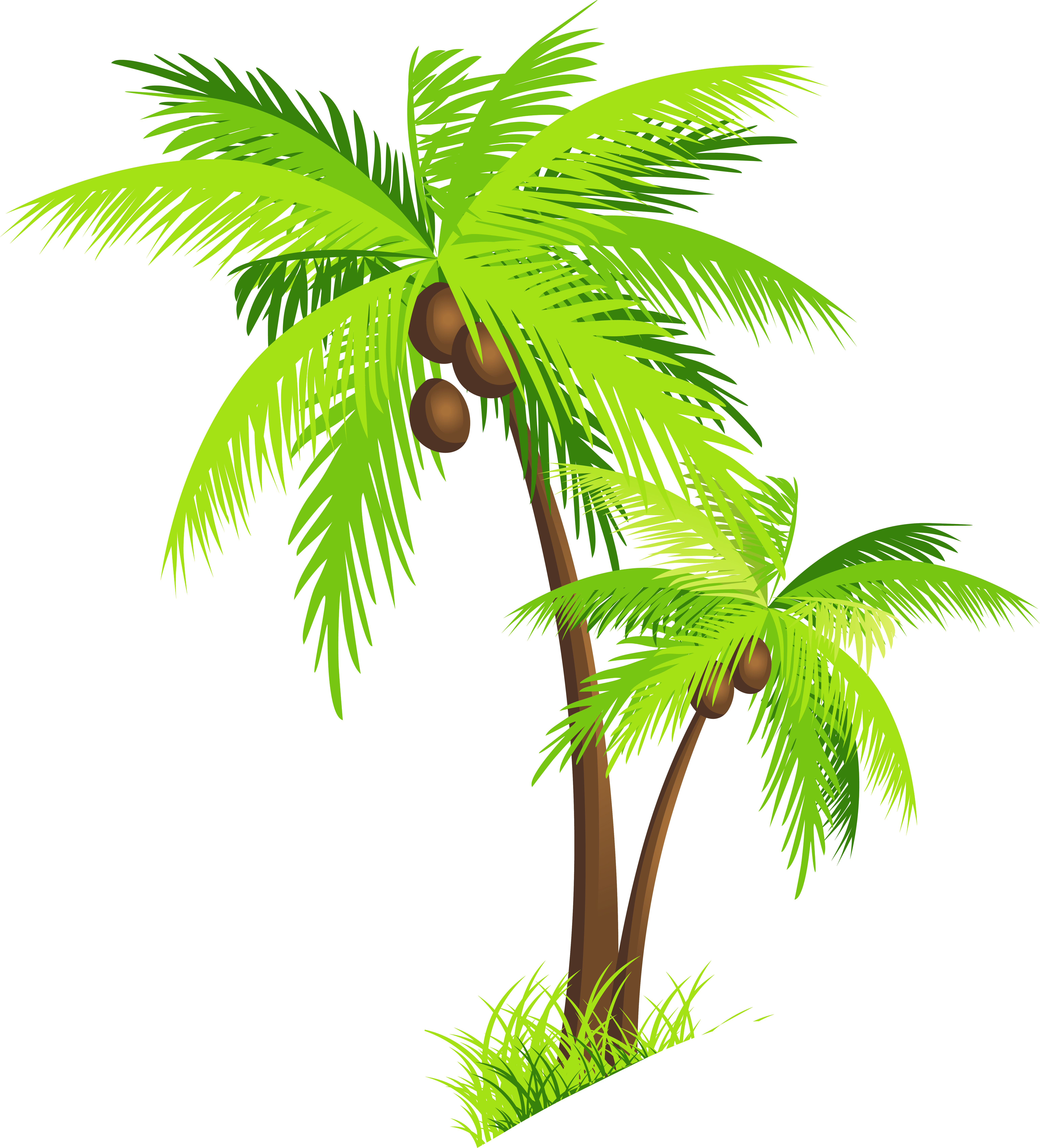Coconut tree clipart png - .