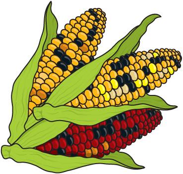 corn clip art best corn clipart #10947 clipartion
