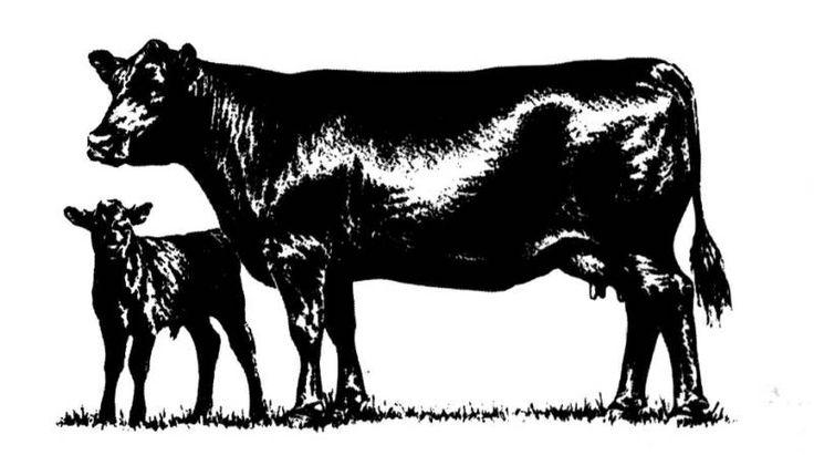 Cow free angus clip art angus merchandise cattle clip