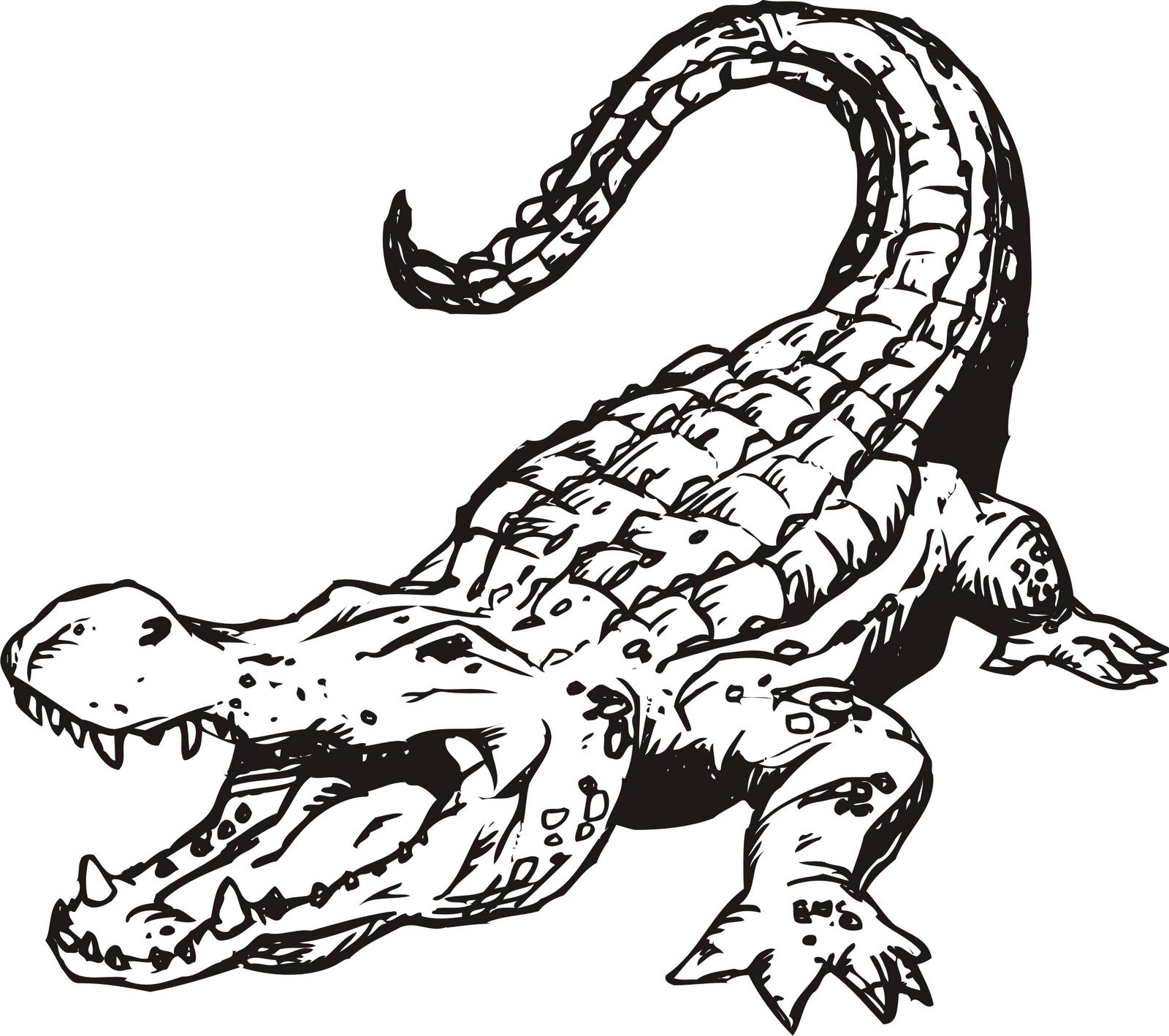 Crocodile free alligator clipart clip art pictures graphics - Clipartix