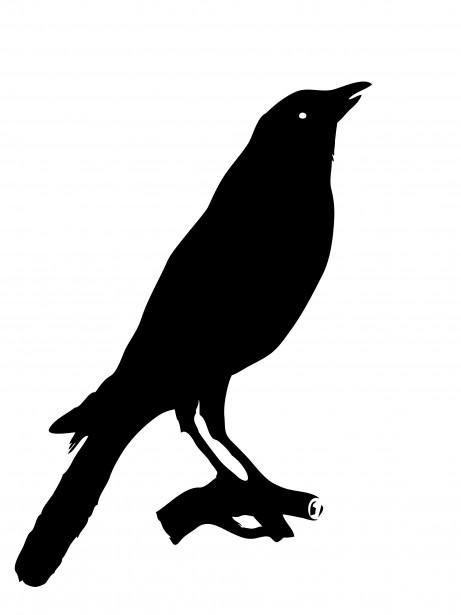 Bird Crow Clipart