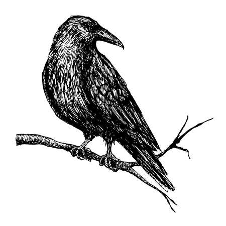 Vector vintage raven on tree branch. Hand drawn illustration.