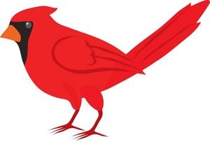 Cute cardinal clipart kid