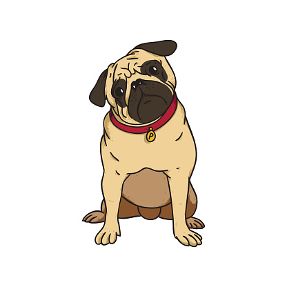 cute puppy pug vector art .