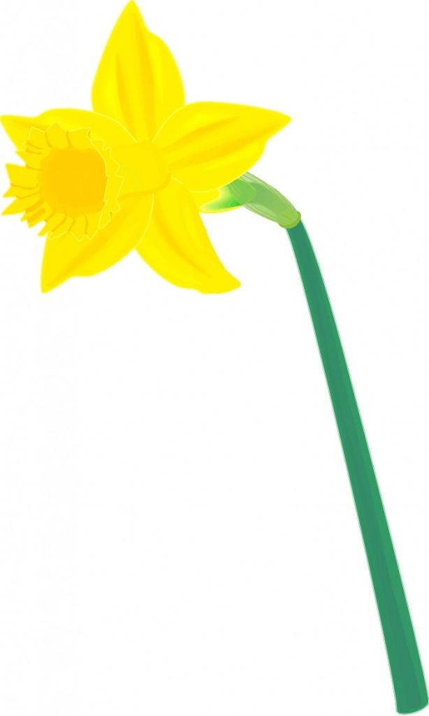 Daffodil-clip-art-12 | .