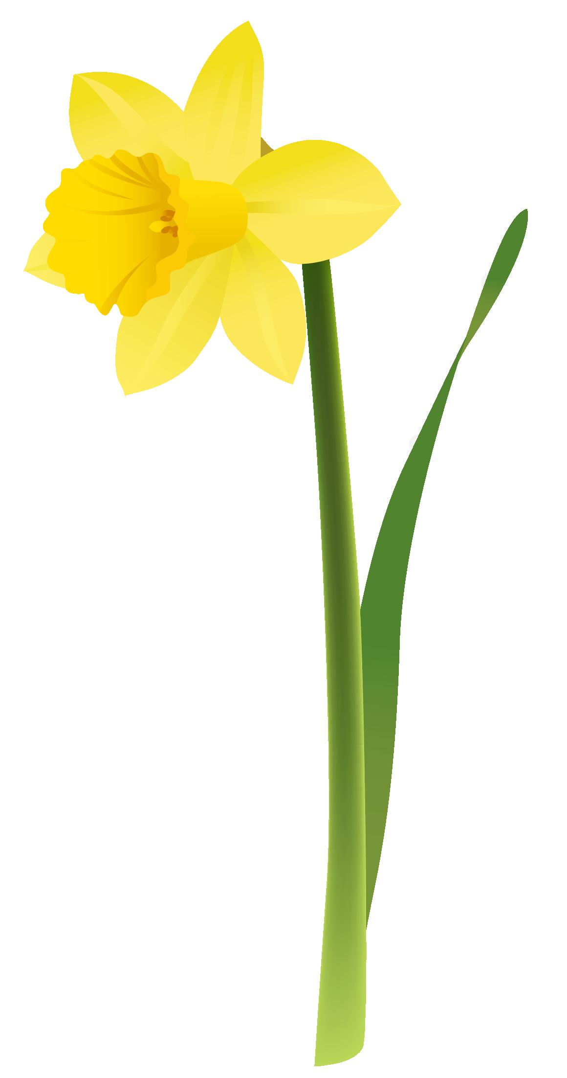 Daffodil Clip Art Free Cliparts Co