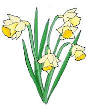Daffodil CLIPART FREE